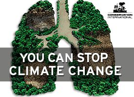 Climate Change Lungs Conservation Intl.
